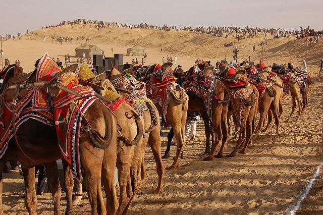 Bikaner camel safari packages