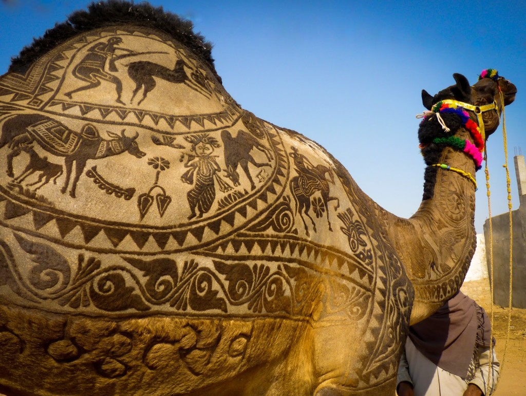 camel-pushkar-fair-rajasthan