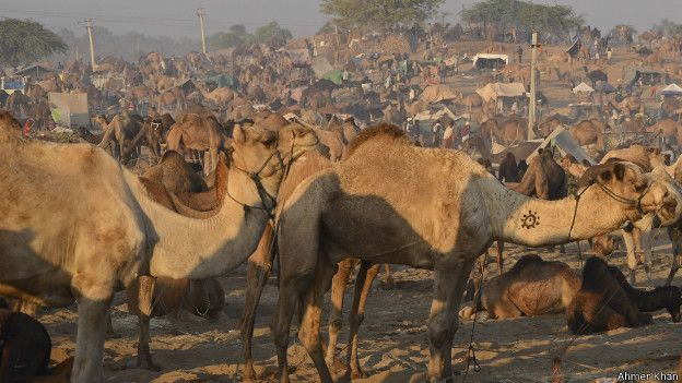 pushkar_fair-rajasthan