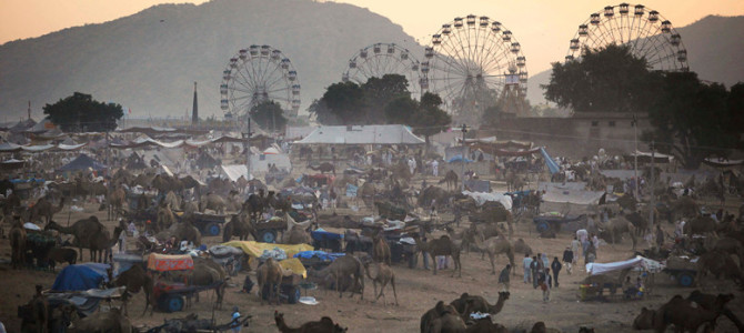 One should never Miss Pushkar Cattle fair and Pushkar Camels