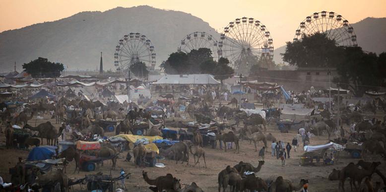 puskar-camel-fair