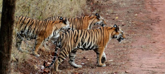 Amazing Wildlife Sanctuary Parks of Rajasthan