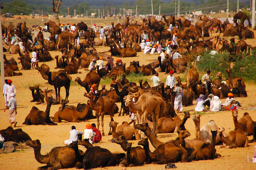 pushkar_fair_activities12
