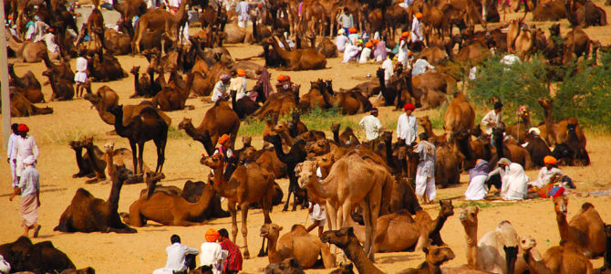 Pushkar Fair – The Legacy of Rajasthan Culture