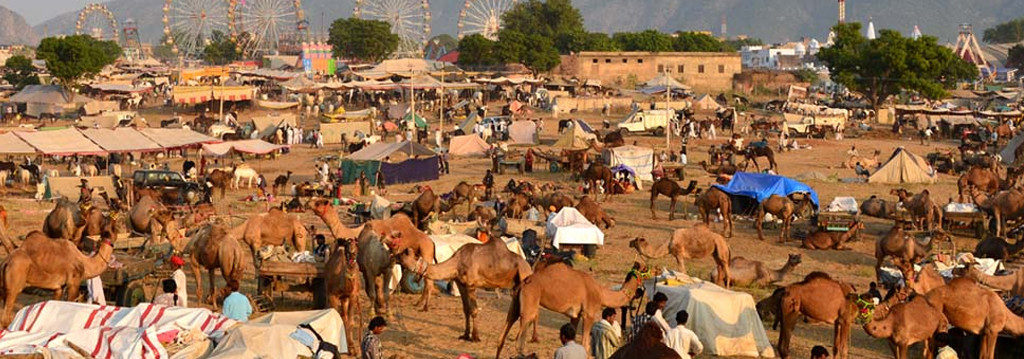 pushkar_fair_activities6