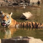 Ranthambore National Park – A Shelter to The Wild