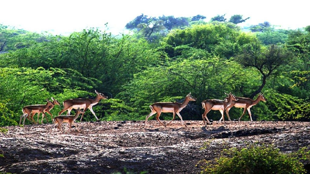 Gajner Wildlife Sanctuary Bikaner