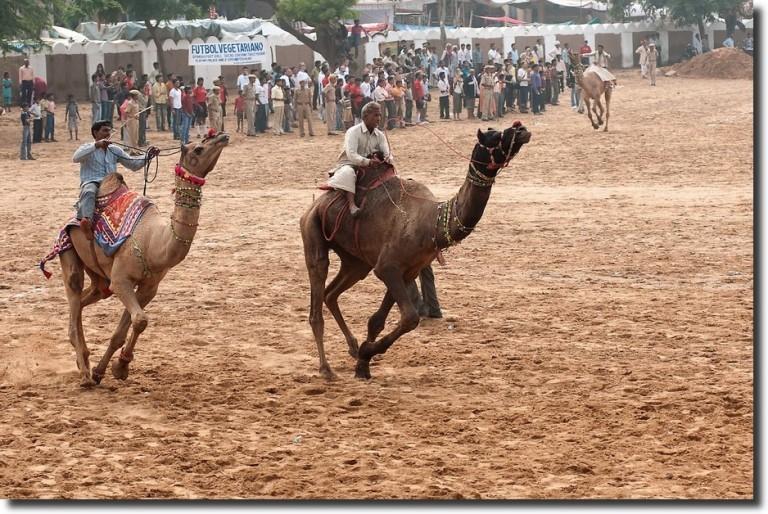 pushkar-fair-