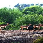 Planning your visit to Ranthambore National Park