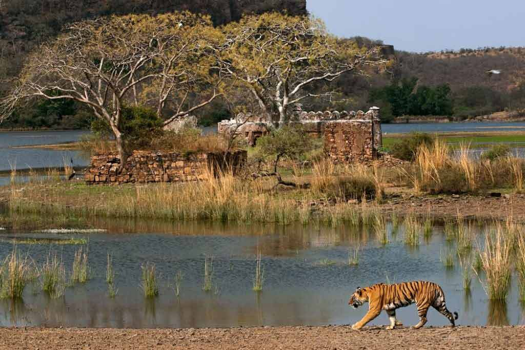 Surwal Lake,Top Ranthambhore Tourist Attractions