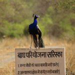 Sariska Wildlife Sanctuary In Rajasthan