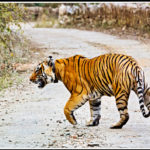 Rajasthan's Another Major Attraction For Tiger Reserve