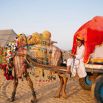 Camel Safari In Rajasthan To Witness The Desert Life Of The Country