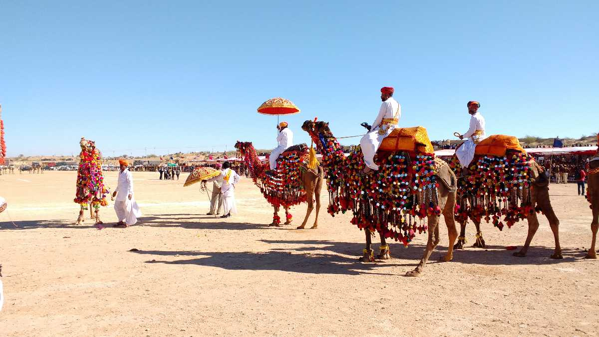 Image result for Go on a camel safari in rajasthan