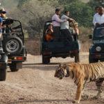 Sariska : Tiger Reserve