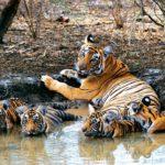 Riserva della tigre di Sariska