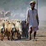 Jodhpur rurale: senti la ricca cultura rurale nei villaggi