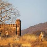Rajasthan : The Land Of Mharajas Are More Much More Exciting