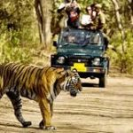 Tiger Reserves in Rajasthan