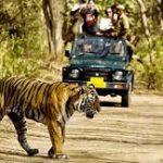 Tiger Reserves in Rajasthan