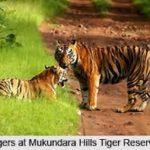 Reservas de tigres en Rajasthan