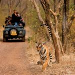 Riserve di tigri nel Rajasthan