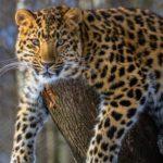 Turismo della fauna selvatica nel Rajasthan