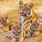 Sariska Wildlife Tour Packages