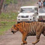 Jaipur – Ranthambore Tour Package