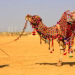 jaisalmer la città dorata del rajasthan
