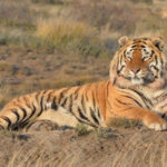 Ranthambore- Wildlife tour with safari