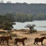 Ranthambore Tour della fauna selvatica con safari