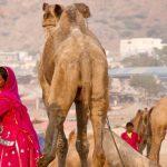 Day Trip To Holy City Pushkar