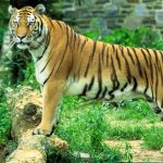 Wildlife Sanctuaries and National Parks of Rajasthan