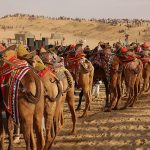Rajasthan Tourism Destinations and Attractions – Revealed