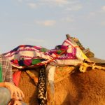 Romantic tour in Rajasthan