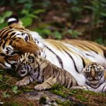 World Famous Wildlife Sanctuaries In Rajasthan