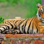 Get Adventurous Tourism With The Tiger Safari Ranthambore