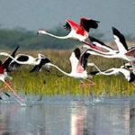 La bellezza della fauna selvatica nel Rajasthan nel loro habitat naturale