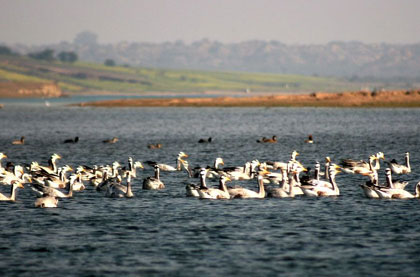 Chambal Bird watching Getaway