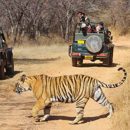 Ranthambore Activities