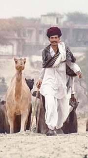 Pushkar Fair Packages