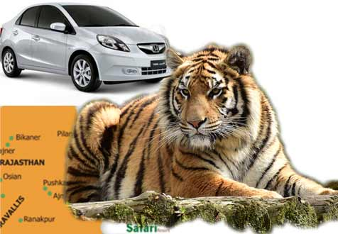 Ranthambore full day car rental