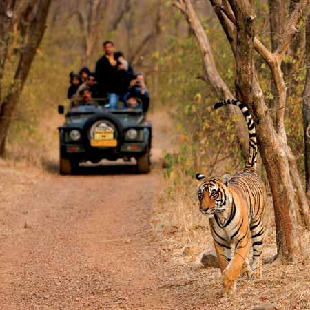 Ranthambhore with Jaipur Agra Tour
