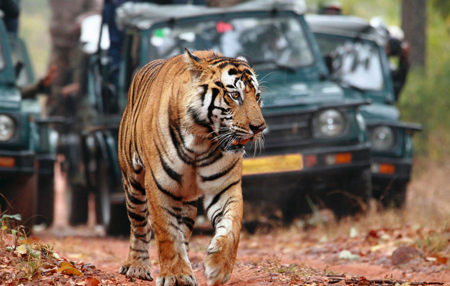 Ranthambore Car Rental