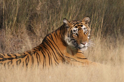 Agra Jaipur Break with Ranthambore