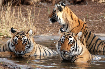 Jaipur Ranthambore Car Rental
