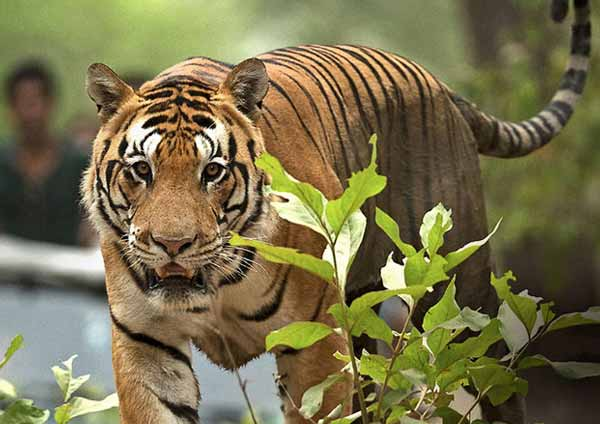 Ranthambore Best Time to visit