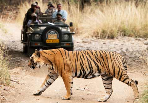 luxury car rental ranthambore
