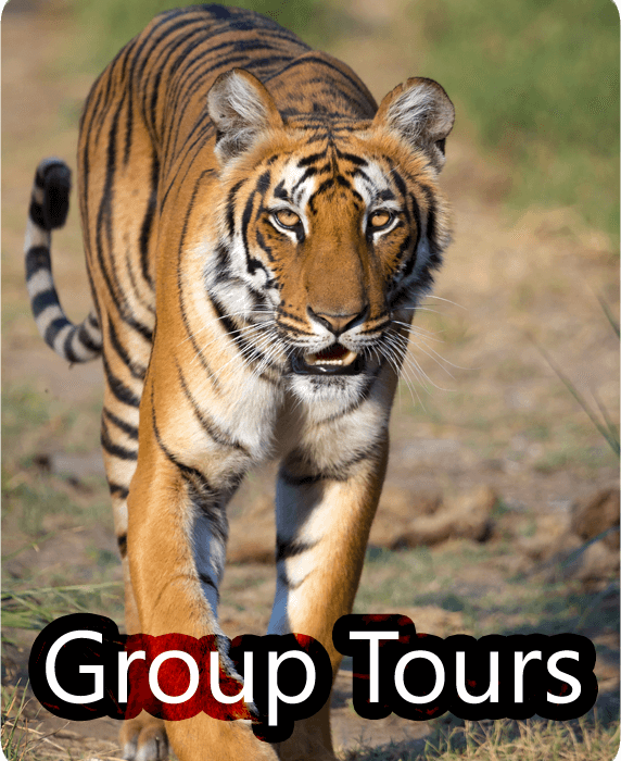 Ranthambore Group Tours
